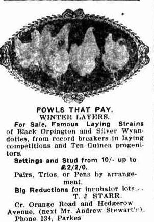 So well known was the Stewart's Rosedurnate that it was used to help advise would be poultry purchasers where they could go for their winter layers! Source: The Western Champion Thursday 5 January 1908, page 18