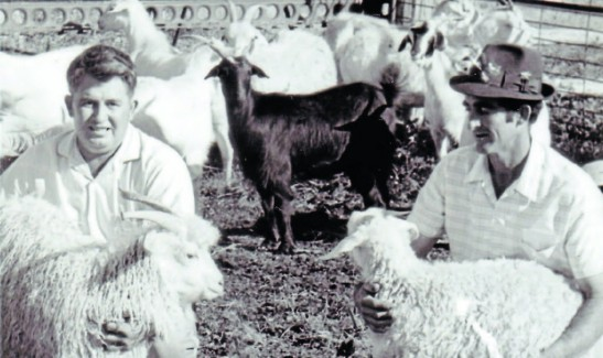 This photograph is part of a special collection by Parkes Champion Post to celebrate the International Year of the Farming Family in 2014. In this photograph, Cliff Westcott (left) and Jack Mulligan are at 'Honey Springs' in 1971 with some of their Angora Goats. This joint venture breeding program started with one pure bred Angora Goat and feral goats from the Harvey Ranges. Source: Jayet, B. (2014, March 12). Cliff Westcott and Jack Mulligan at 'Honey Springs' in 1971 [Photograph found in Farming History dates back to 1865, but Neil and Alison now doing it their way, Parkes Champion Post, Parkes]. Retrieved April 26, 2017, from http://www.parkeschampionpost.com.au/story/2144583/farming-history-dates-back-to-1865-but-neil-and-alison-now-doing-it-their-way/#slide=7 (Originally photographed 2014, March 12)