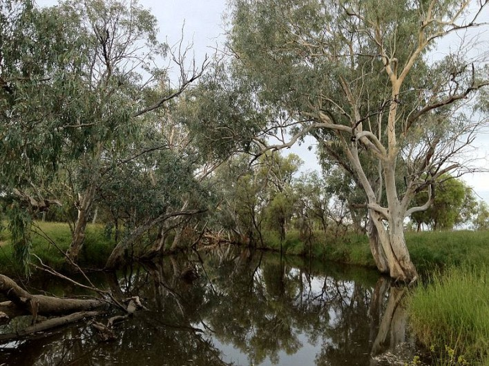 Photograph of a section of Barcoo River, at Tambo, central west Queensland. Kennedy renamed the river after Mitchell initially called it Victoria, believing it to be the same river discovered by Wickham in 1839. The Barcoo is mentioned in some of Banjo Paterson's poems (notably Saltbush Bill and A Bush Christening) and the Barcoo Salute - brushing away the ever present flies from the face with either hand - is named after the river (there is also a biography by Patsy Adam-Smith called The Barcoo Salute) Source: Wikipedia
