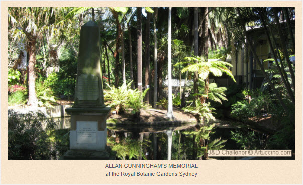 Photograph of Allan Cunningham's Obelisk at the Royal Botanic Gardens in Sydney. Cunningham was originally buried in the Devonshire Street Cemetery in Sydney. His remains were reinterred in an obelisk erected to honour him, which is located in the Royal Botanic Gardens, Sydney. Image Source: J&D Challenor The Allan Cunningham Project. Information Source: The Sydney Morning Herald, Saturday 29 July 1901 page 9