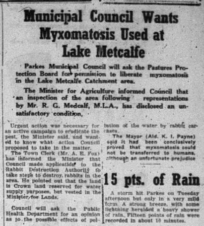 The rabbit population was so dire that Parkes Municipal Council considered using myxomatosis. You could also find advertisements for skins, rabbit meat and trappers. Source: Parkes Champion Post Thursday January 10, 1952 page 1