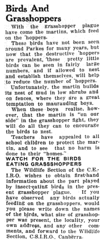 With summer approaching Parkes region in the middle of a grasshopper plague. However the plague also attracted its possible solution - martins - birds that feed on grasshoppers. CSIRO was also asking for assistance in identifying other birds that eat insects. Source: Parkes Champion Post Monday, November 9, 1953 page 1