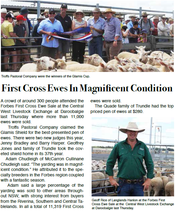 A significant event - the Forbes First Cross Ewe Sale at the Central West Livestock Exchange at Daroobalgie, where more than 11,000 ewes were sold. Source: Parkes Phoenix Friday January 13, 2017 p.7