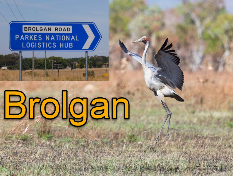 "The Australian crane aka brolga, was once called ""brolgan"" and has the same definition as the place name in Aboriginal language, ""native companion"". Source: Bush Heritage Australia website; and ABC website"